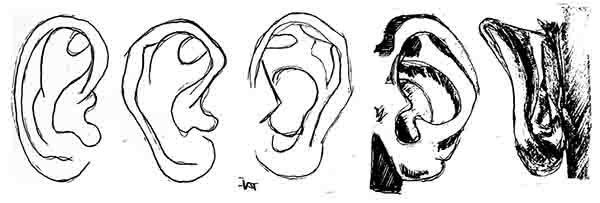 Example of drawing ears